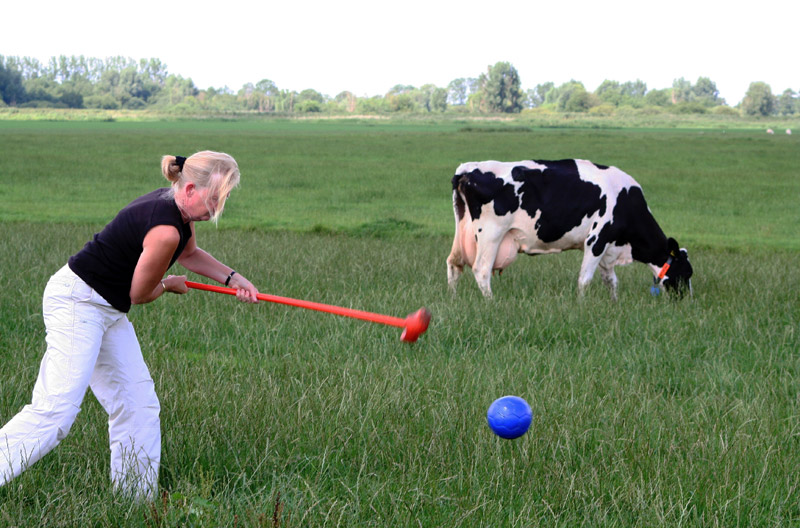 Boerengolf tussen de koeien